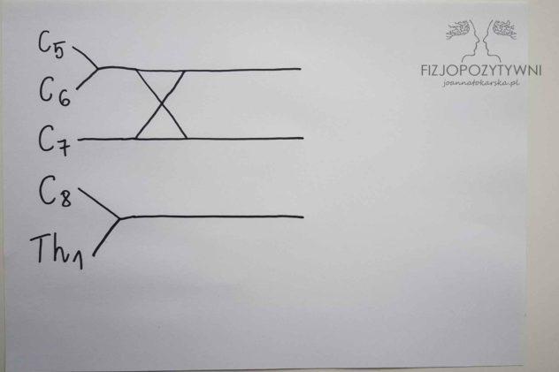 Splot ramienny Splot barkowy Joanna Tokarska Narysuj znak X pomiędzy górnymi liniami