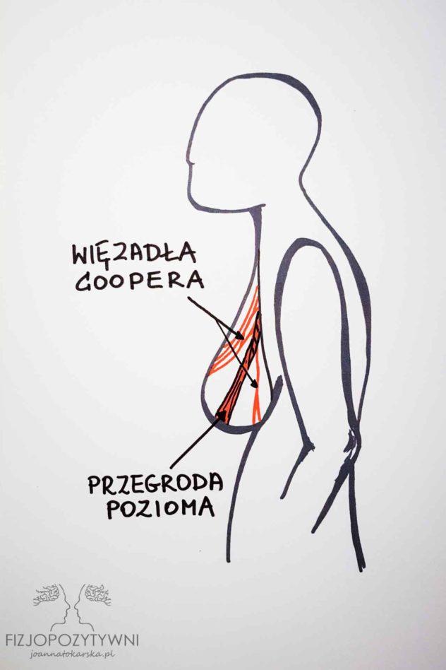 Czy plecy mogą boleć od piersi? Pod wpływem czynników takich, jak przyrost masy, wiek, niewłaściwa bielizna, aparat więzadłowy ulega rozluźnieniu.