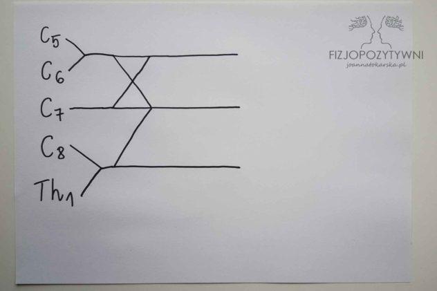 Splot ramienny Splot barkowy Joanna Tokarska Narysuj znak / pomiędzy dolnymi liniami