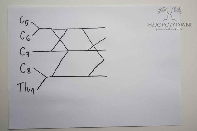 Splot ramienny Splot barkowy Joanna Tokarska. Narysuj znak / tak, aby jego koniec znalazł się pomiędzy dwoma górnymi liniami. Właśnie rozrysowałeś pęczki splotu ramiennego.