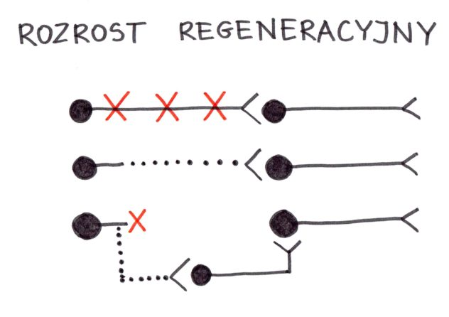 Joanna Tokarska Rozrost regeneracyjny