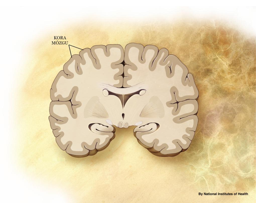 Jak pokonać demencję? Joanna Tokarska Fizjopozytywna Fizjoterapia bez granic podcast fizjoterapeuty podkast fizjoterapia podkast fizjoterapeuty